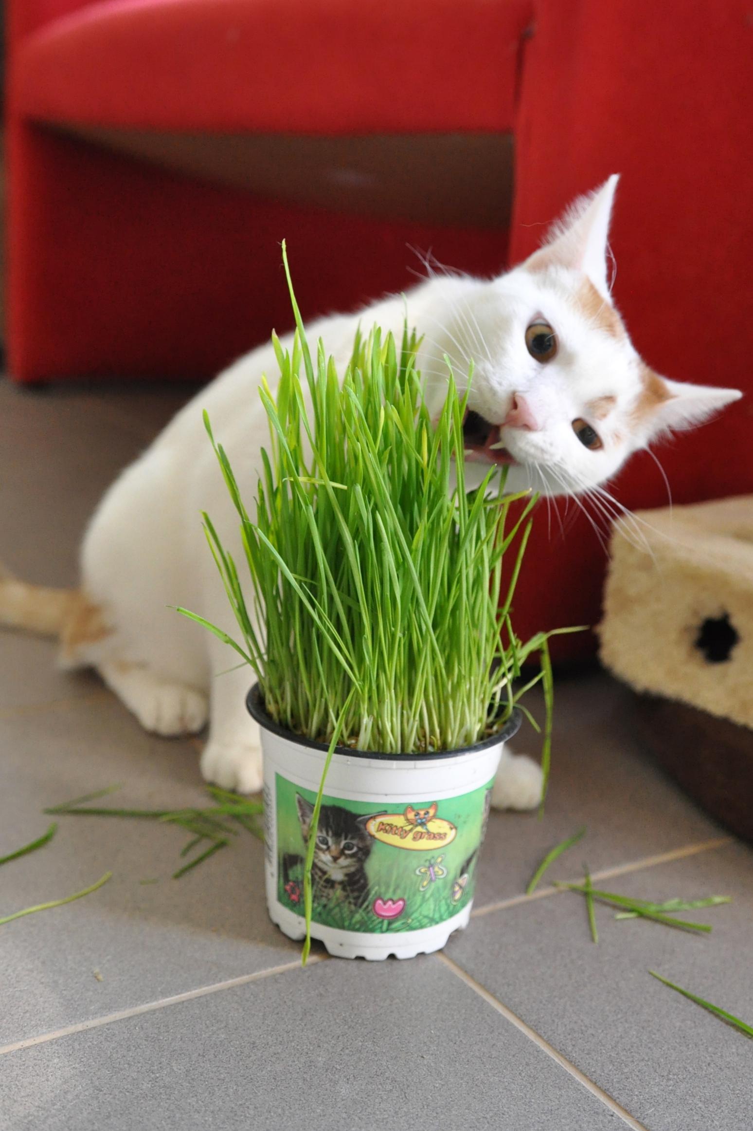 Mačky a tráva