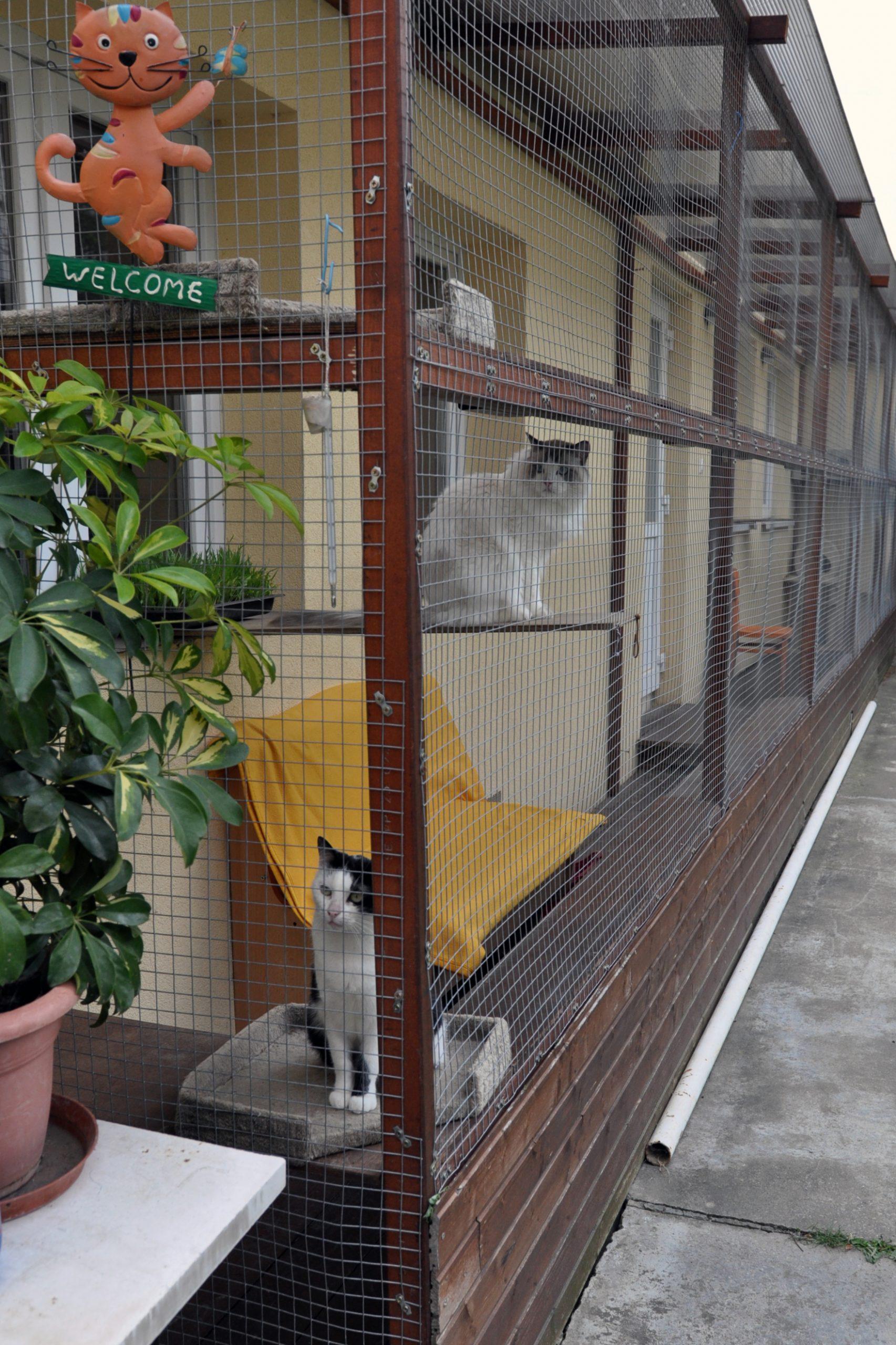 Výbeh pre mačičky